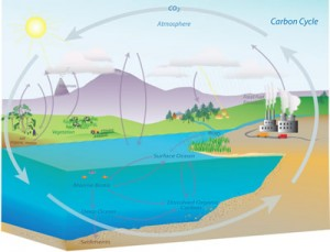 Carbon Cycle NOAA