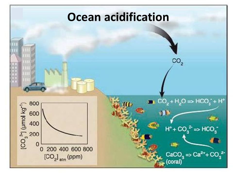 the effects of climate and acidification How is climate change affecting fragile coral reef ecosystems  and joshua  jackson discuss how ocean acidification may impact coral reefs.