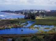 Waihe'e Coastal Dunes and Wildlife Refuge - Fern Duvall