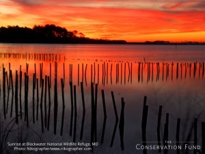 Blackwater_NWR_sunrise_nikographer